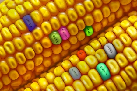 GMOs: What You Should Know